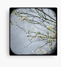 ~white on grey 1~ Canvas Print