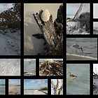 Beach Montage.... : Lovers Key  by Elizabeth Rodriguez