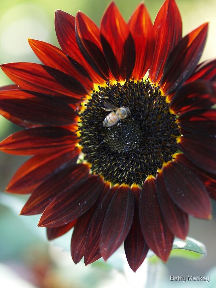 Wine Red Sunflower by Betty Mackey