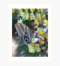 butterfly house Art Print