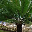 Palm Tree In Puerto Plata by Vickie Emms