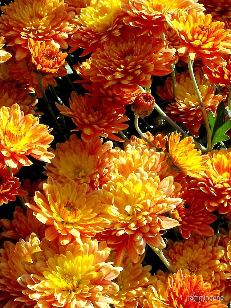 Orange and yellow by jammingene
