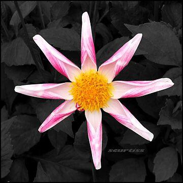 Star Flower Art by GraceArt