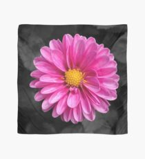 Bright pink flower with black background Scarf