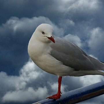 Storm Gull by UncaDeej