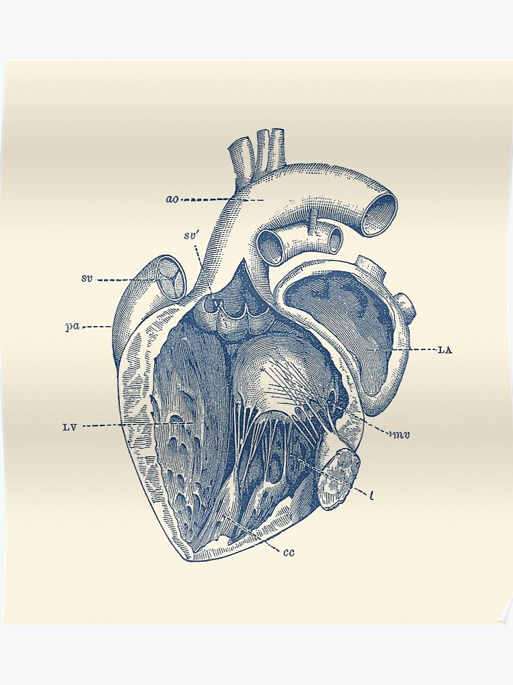 Internal Structure Of Human Heart Pencil Diagram - Aflam ...