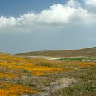 Antelope Valley by Chris Clarke