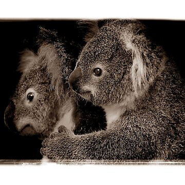 Koala Mother and Joey by ShannonPlummer