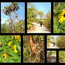 Black Island Nature Trail ( @ Lovers key State park )  by Elizabeth Rodriguez