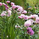 Pink Garden... by pat oubridge