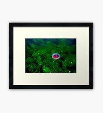 Ocean Gardens Framed Print