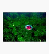 Ocean Gardens Photographic Print