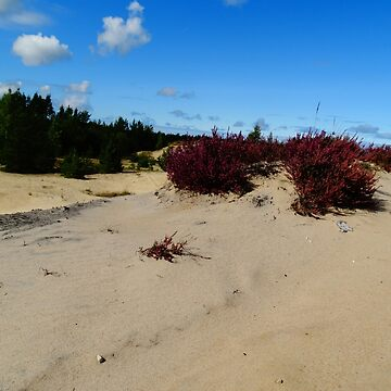 Sand mounds by elsie