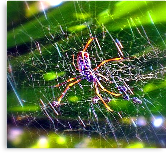 Oh What A Tangled Web We Weave! by Margaret Stevens