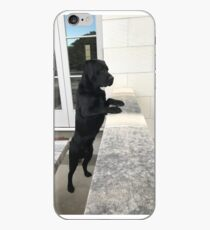 Black Labrador Standing iPhone Case