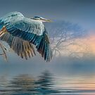 Misty Dawn Heron by Brian Tarr