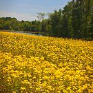 Floral Field by klh0853