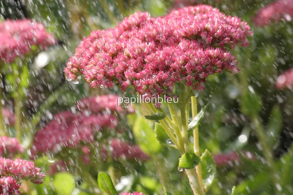 Ice Plant Flower in the Rain by Pamela Jayne Smith
