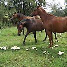 Ponys at the Mushroom Ring by WatlingBates