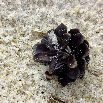 Pine Cone in Sand by elsie