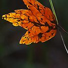 Dangling by glink