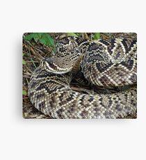 Eastern Diamond Back Rattlesnake Canvas Print