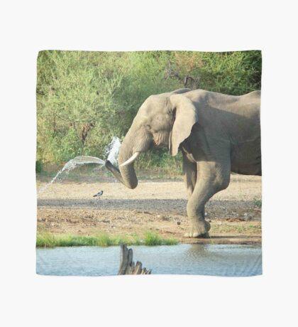 LAST SHOWER -  THE AFRICAN ELEPHANT – Loxodonta africana Scarf