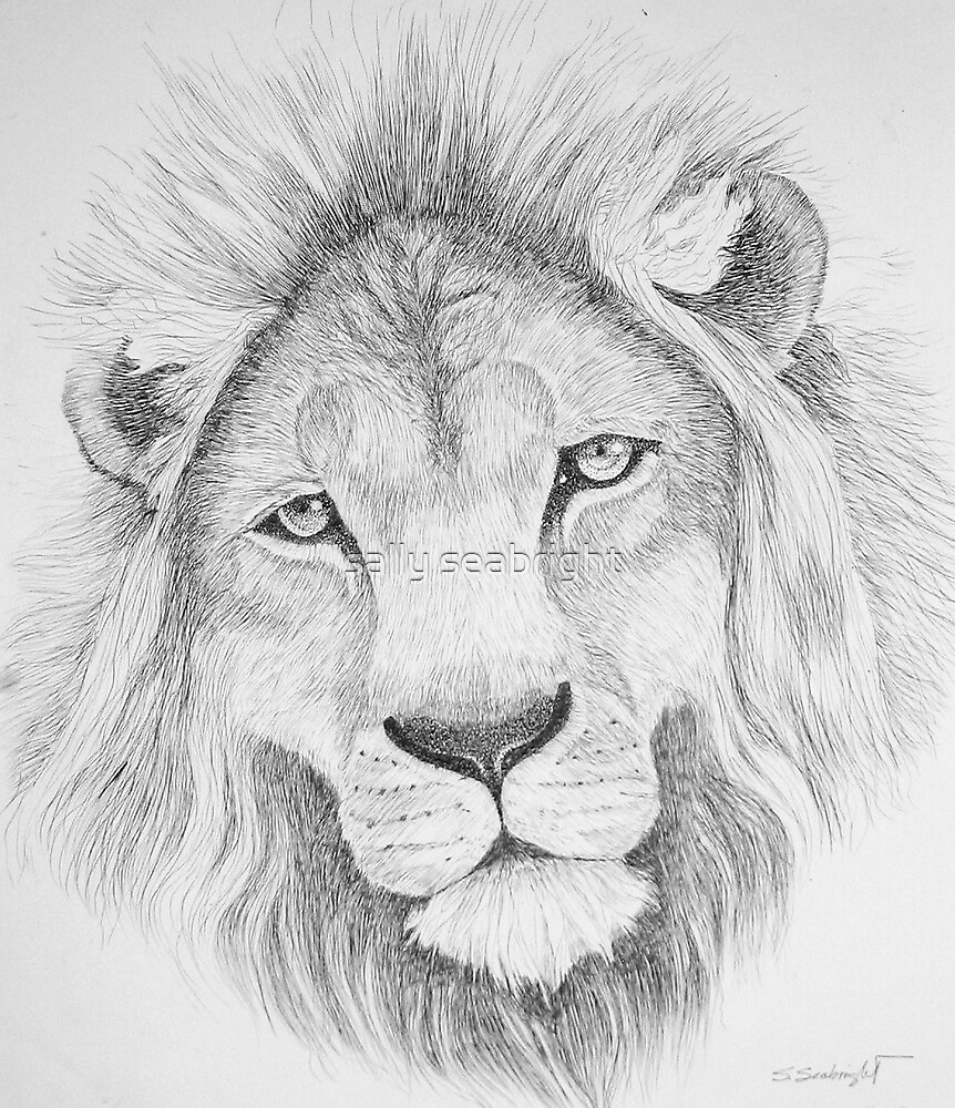 Lion's Head by sally seabright
