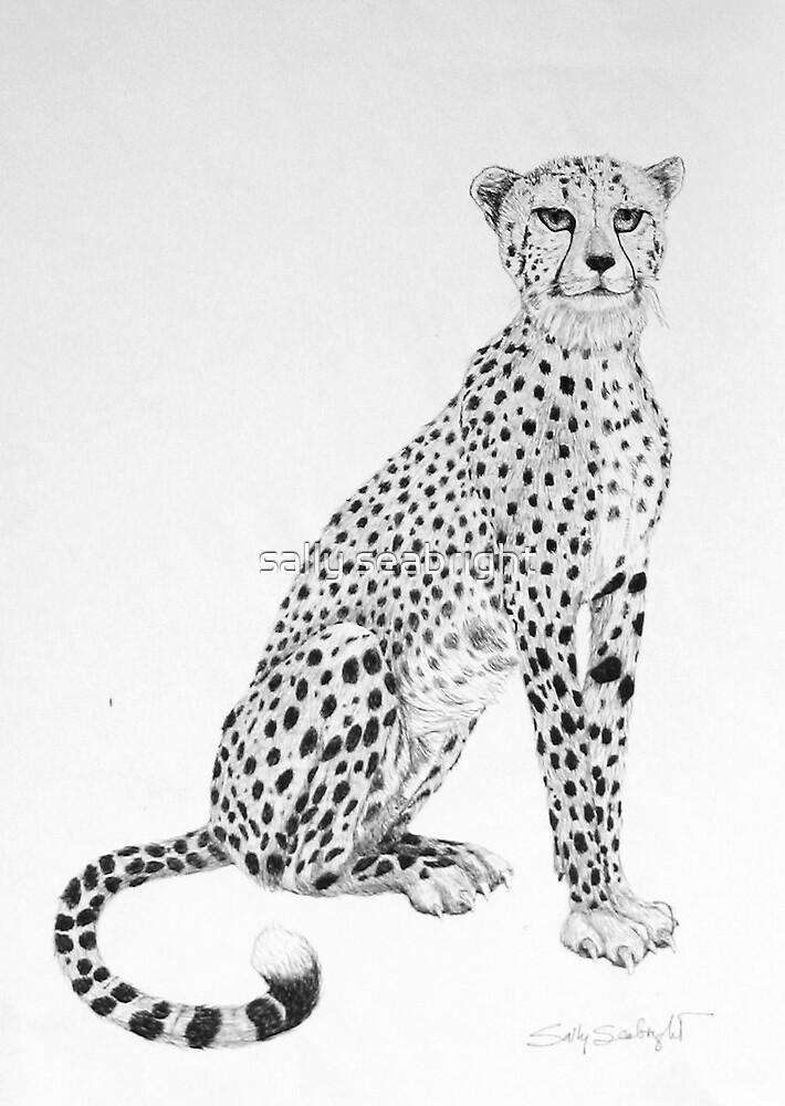 Cheetah by sally seabright