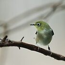 Bird by Rose Mary Cheek
