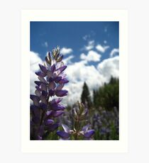 Lupin Flowers Art Print