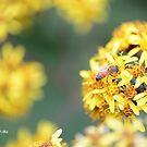 Busy Bee by Darren Freak