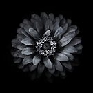 Backyard Flowers In Black And White 69 by Brian Carson