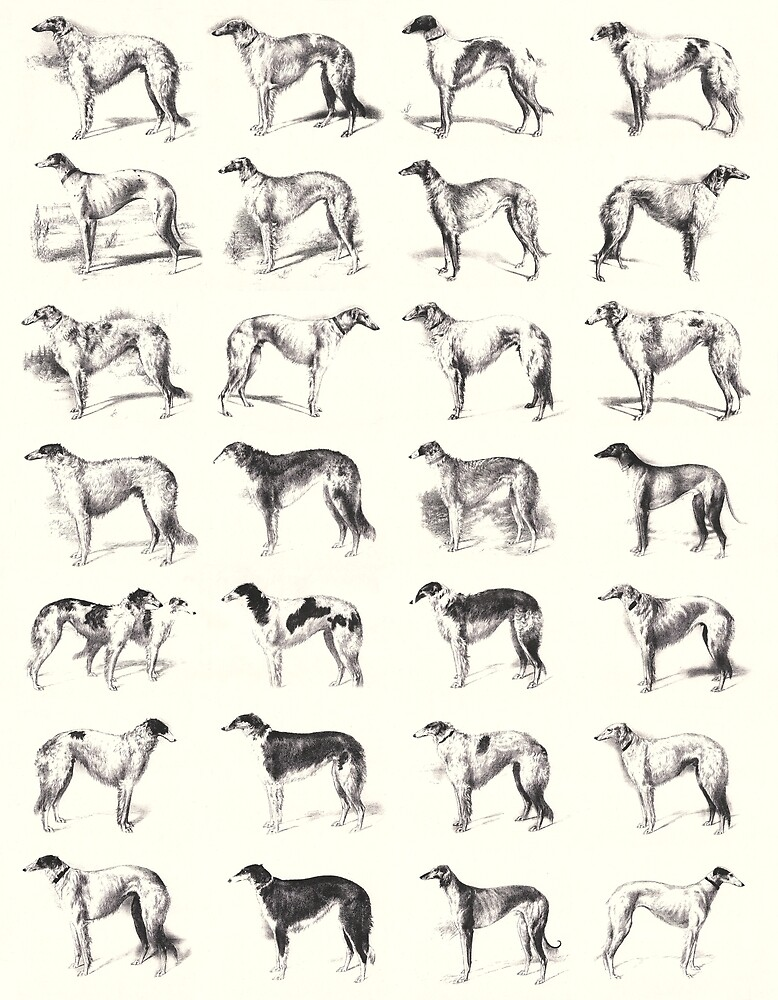 Martynow Borzoi 28 Vintage Sketches by Happy Dog Swag