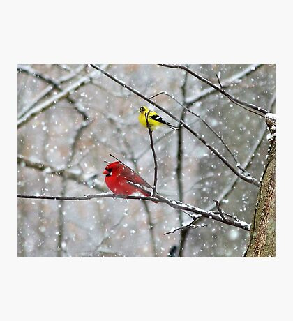 Goldfinch and Cardinal Photographic Print