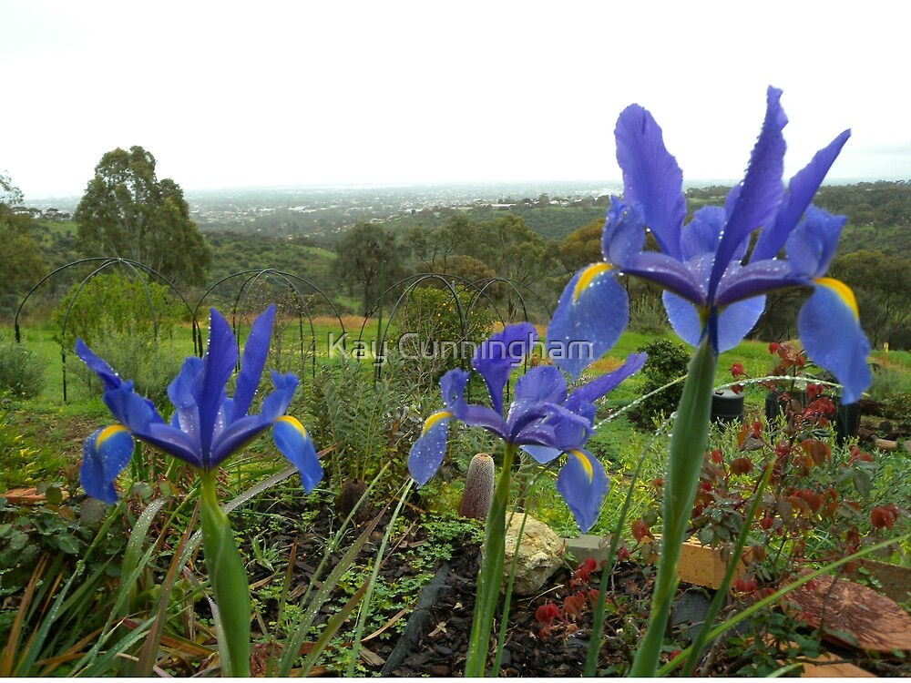 Irises In Our Garden! by Kay Cunningham