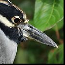 Nite Heron by glink