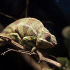 Chameleon by JC-Photography