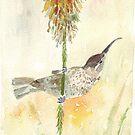 Amethyst Sunbird female by Maree Clarkson