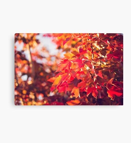 Autumn leaves of red and gold Canvas Print