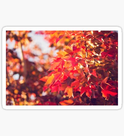 Autumn leaves of red and gold Sticker