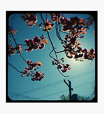 spring cherry tree ttv Photographic Print
