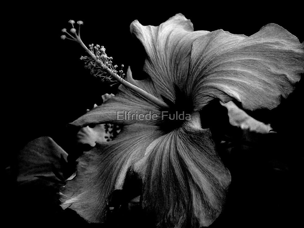 Humility by Elfriede Fulda