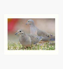 Mourning Doves Art Print