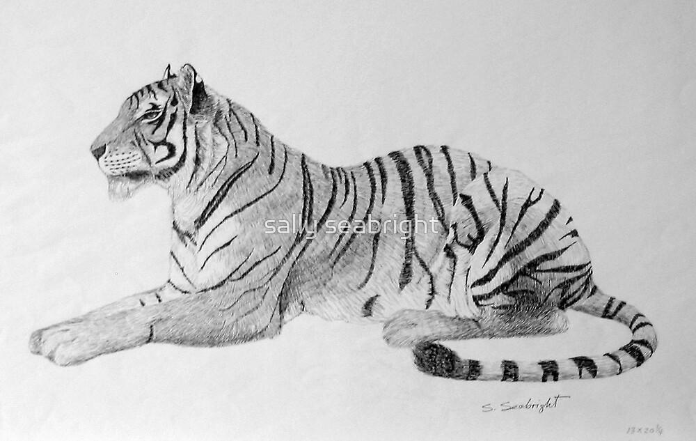 Tiger by sally seabright