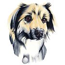 German Shepherd Hugo by Apatche Revealed