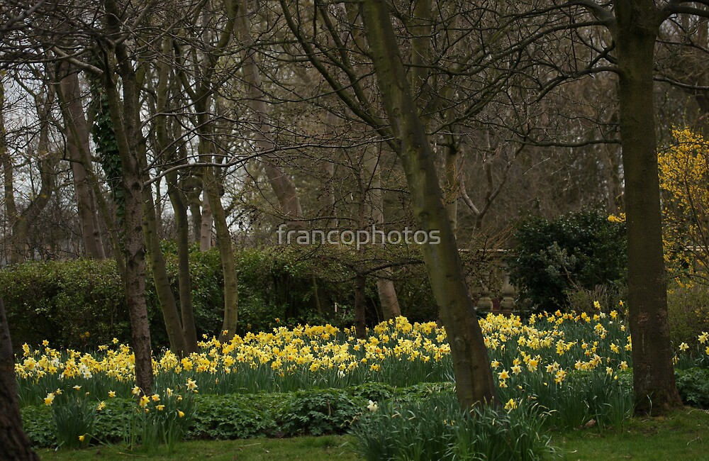 Spring Has Sprung! by Franco De Luca Calce