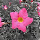 Pretty Pink Bunch ll by MichelleR