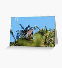 Proud Mama of Five baby Green Herons Greeting Card