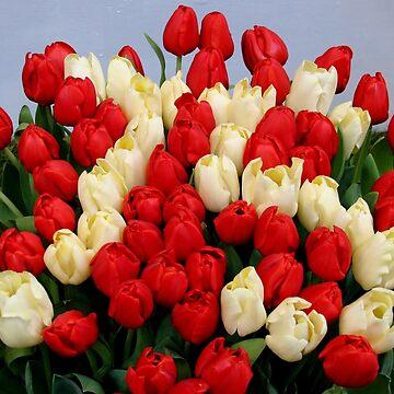 Tulip Bouquet 75 Years by Jokus